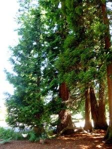 frontyardtrees2